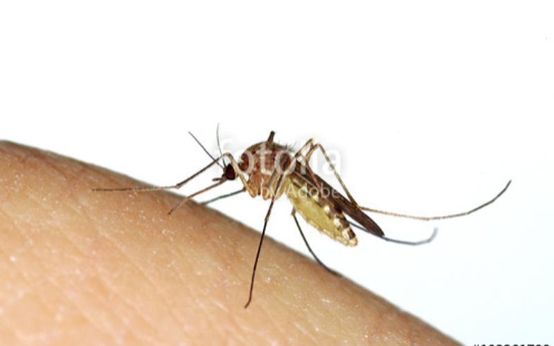Insektenschutz Lexicon